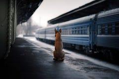Chien à la station de train Déplacement avec l'animal familier Images libres de droits