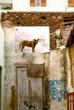Chien à Ribeira Brava dans le sao Nicolau au Cap Vert images libres de droits