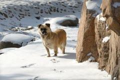 Chien égaré dans la neige Image libre de droits