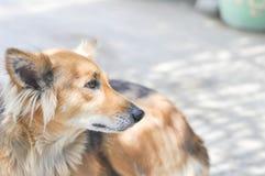 Chien égaré ou chien métis Photo libre de droits