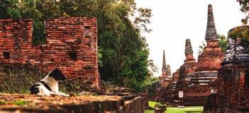 Chien égaré se situant en parc de Wat Phra Sri Sanphet Historical, Ayuthaya, Thaïlande, Asie du Sud-Est Photo stock