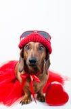 Chien élégant dans le costume rouge Photographie stock