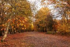 Chien éloigné dans la forêt du Sussex images libres de droits