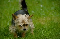 Chien Photo stock