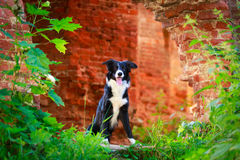 Chien Image stock