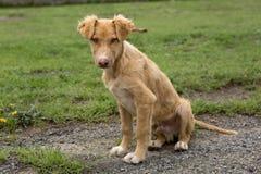 chien Image libre de droits