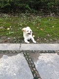 Chien images stock