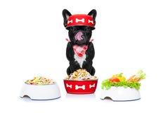 Chien affamé avec des bols de nourriture Photographie stock