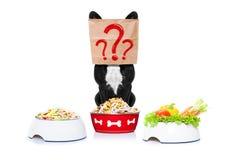 Chien affamé avec des bols de nourriture Image stock