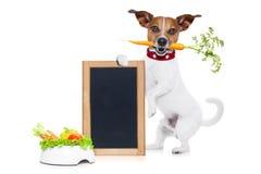 Chien affamé avec la cuvette saine de vegan Photo stock