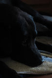 chien attendant la nourriture Photos stock