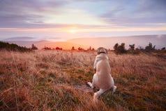 Chien au coucher du soleil images libres de droits