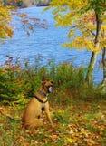 Chien au lac Photographie stock