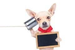 Chien au téléphone Image libre de droits