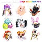 Chien avec des accessoires de mode Les chiens à la mode multiplient l'ensemble Fond de magasin de bêtes Animal domestique mignon illustration libre de droits