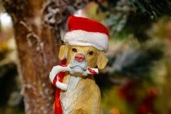 Chien avec l'ornement de canne de sucrerie et de chapeau de Santa Photo stock