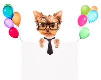 Chien avec la bannière de vacances et les ballons colorés Photographie stock libre de droits