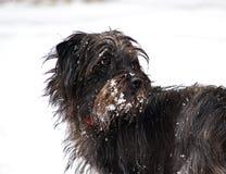 Chien avec la neige Photos libres de droits