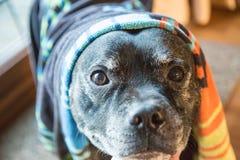 Chien avec la serviette sur sa tête photo libre de droits