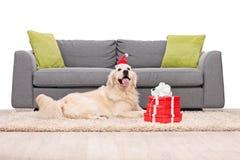 Chien avec le chapeau de Santa se trouvant sur un tapis Image libre de droits