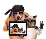 Chien avec le chat prenant un selfie ainsi qu'un comprimé images stock