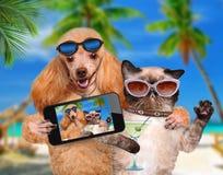 Chien avec le chat prenant un selfie ainsi qu'un smartphone Image libre de droits