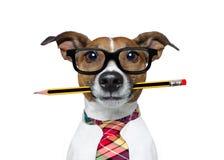 Chien avec le crayon au bureau photographie stock libre de droits