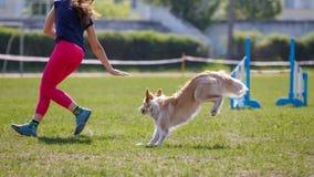 Chien avec le maitre-chien courant en concurrence d'agilité Photo libre de droits