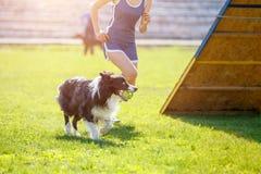 Chien avec le maitre-chien courant en concurrence d'agilité Images libres de droits
