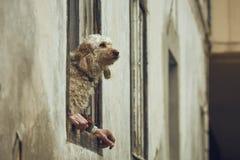 Chien avec les mains humaines Photographie stock libre de droits