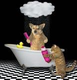 Chien avec un chat dans la salle de bains 2 image libre de droits