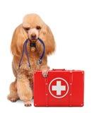 Chien avec un kit de premiers secours image libre de droits