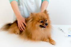 Chien avec un vétérinaire image stock