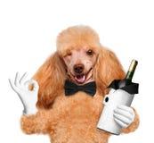 Chien avec une bouteille de vin photographie stock libre de droits
