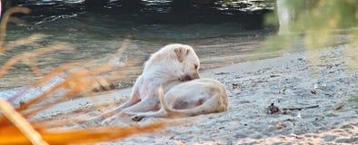 Chien blanc dans une plage Images libres de droits