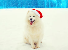 Chien blanc heureux de Samoyed de Noël dans le chapeau rouge de Santa se reposant sur la neige en hiver Photographie stock