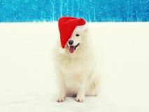 Chien blanc heureux de Samoyed de Noël dans le chapeau rouge de Santa sur la neige en hiver Image stock