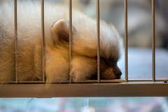 Chien brun gentil seul dormant dans la cage photo libre de droits