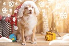 Chien brun mignon de chiwawa de couleur avec le concept de Noël, St de voyage Photographie stock libre de droits