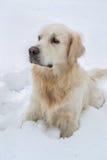 Chien brun mignon se reposant dans la neige et regardant loin Photographie stock libre de droits