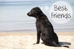 Chien chez Sandy Beach, meilleurs amis des textes Photographie stock libre de droits