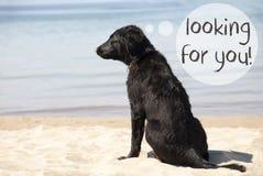 Chien chez Sandy Beach, texte vous recherchant Images libres de droits