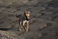 Chien courant image stock