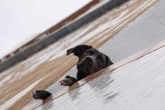 Chien curieux sur le balcon Image libre de droits