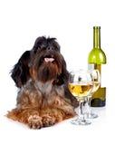 Chien décoratif avec une bouteille de vin et de verres Images stock