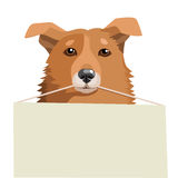 Chien d'adoption près de moi Abris de chien Animaux gratuits pour l'adoption Ami de recherche Images stock