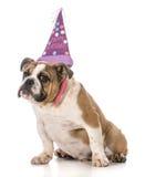Chien d'anniversaire Photographie stock