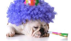 Chien d'anniversaire images stock
