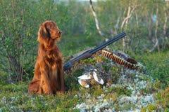 Chien d'arme à feu près au fusil de chasse et aux trophées, Photos libres de droits