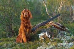 Chien d'arme à feu près au fusil de chasse et aux trophées, Photos stock
